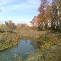 Березовая роща р.Ададымка, Назарово