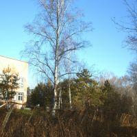 Берёзовая роща, больница, Назарово