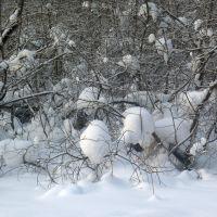 Зимняя сказка, Назарово