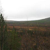 Среднесибирское плоскогорье, гари после пожаров, Северо-Енисейский