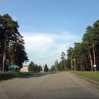 Сосновый бор - памятник природы, Тюхтет