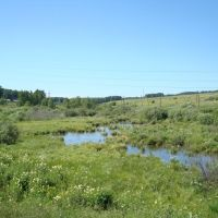 с. Шалинское, болото, Шалинское