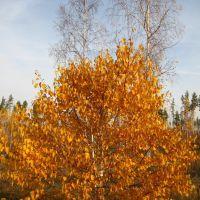 Осень, Глядянское