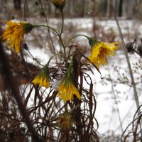 Последние цветы, Глядянское