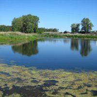 Пруд на реке Гологузка в деревне Ордина, Глядянское