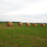 После сенокоса (haystacks), Глядянское