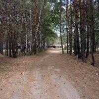 дорожка к особняку в лесу, Кетово