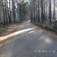 лесная дорога, Кетово