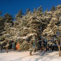 Пионерский лагерь зимой, Альменево