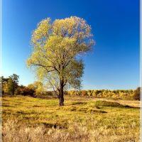 Последние листья, Альменево