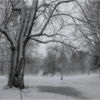 В парке зимой, Глушково