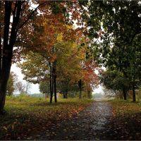 Осень в Глушковском парке. После дождя, Глушково