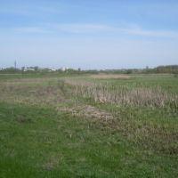 meadow, Дмитриев-Льговский