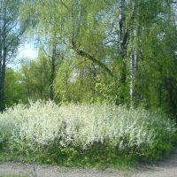 boevka, Курск