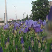 цветы на набережной, Курчатов