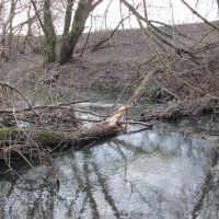 Речка Грайворонка, подпруженная бобровой плотиной, возле д. Дицево, Кшенский
