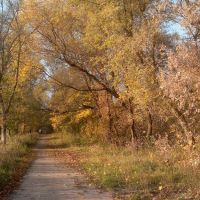 Тропинка в Барятинском парке, Льгов