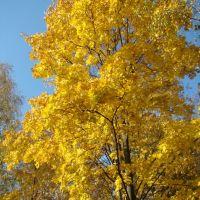 Осень в Данкове, Данхов
