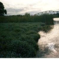 Жд мост и незабудки, Данхов