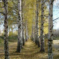 Волжск Осенняя аллея, Волжск