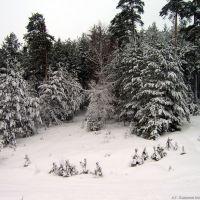 Опушка леса, Волжск