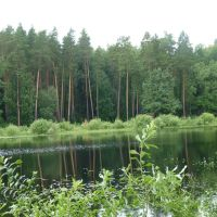 самое начало озера у Звенигово, Звенигово
