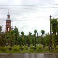 Обрубленные деревья, Медведево