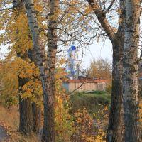 Деревья на берегу р. Шукшан, Новый Торьял