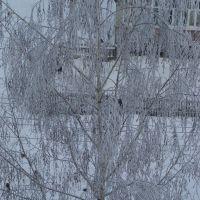 Снегири, Советский