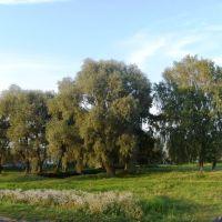 Сельский пейзаж, Большое Игнатово