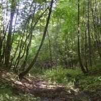 В лесу, Большое Игнатово
