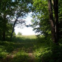 Вид из леса, Большое Игнатово