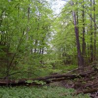 Лесной овраг., Большое Игнатово
