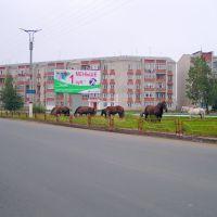 кони на газоне, Краснослободск
