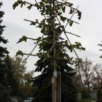 Модные веяния в озеленении, Торбеево