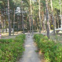 Мостик, бассейн и черепаха, Протвино