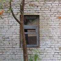 Alabino - Russian Windows, Алабино