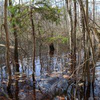 Затопленный лес, Бакшеево
