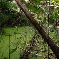 Наше болото (Our bog), Балашиха