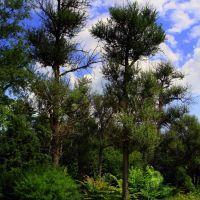 Флора нашего парка (The flora in our park), Балашиха
