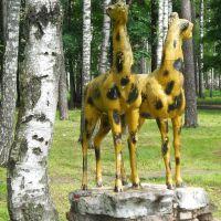 Гордые жирафы..., Балашиха