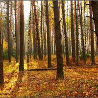 Осенний лес, Белоомут