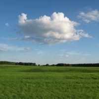 Облако в поле, Белые Столбы