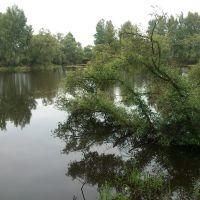Лесной прудик, Белые Столбы