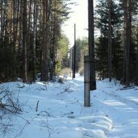 Лес (апрель), Бородино
