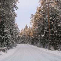 Дорога к санаторию Озеро Белое, Бородино