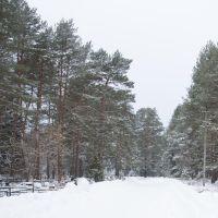 Cemetery in the forest  Кладбище в лесу, Вербилки