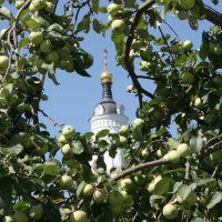 Яблочный спас, Волоколамск