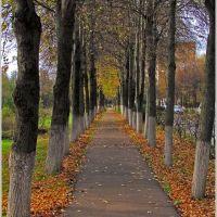 Осення дорожка, Воскресенск