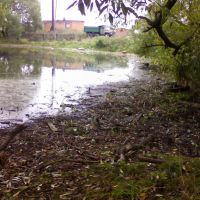 грязный пруд  в дер.Масюгино, Высоковск